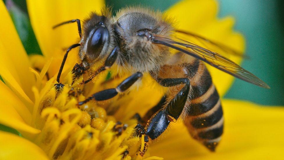 Ataques de abelhas e vespas: saiba por que aumentam em época de seca