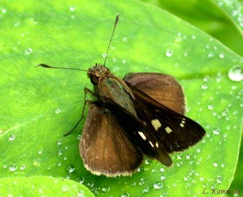 Casos de alergia por mariposa assustam Litoral do Paraná: 160 em doze horas