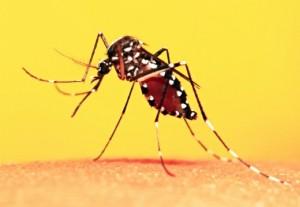 Principais dúvidas sobre o surto de febre amarela
