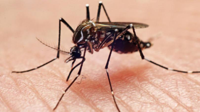 Quase 30% das cidades do Paraná tem suspeitas de dengue