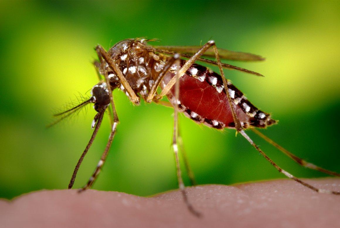 Focos da dengue quase triplicam em Curitiba