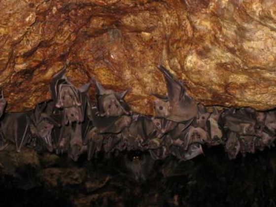 Ataques de morcegos a cães deixam moradores assustados em Patamares