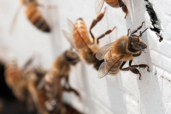 Pai e filho são picados por abelhas em Cianorte