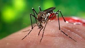 Número de casos de dengue diminui no Paraná; Nenhuma morte é registrada desde agosto