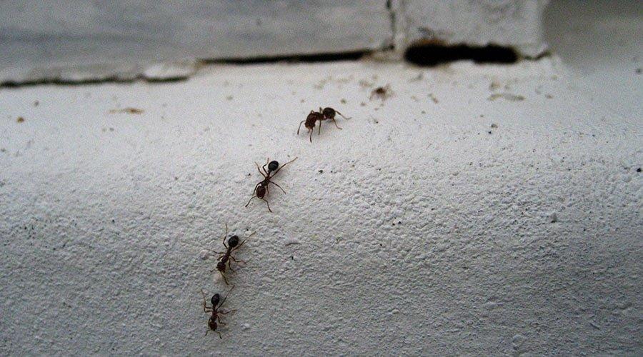 Calor e chuva desentocam insetos