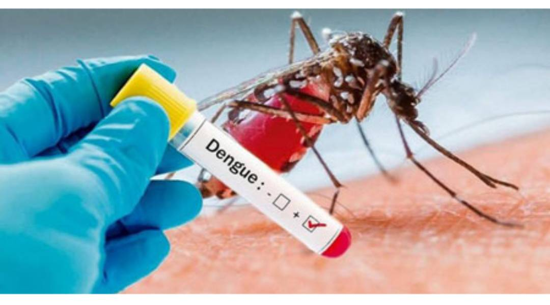 Dengue pode fornecer algum nível de imunidade à covid-19, revela estudo