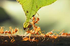 É verão e os insetos vão invadir a sua casa, prepare-se!