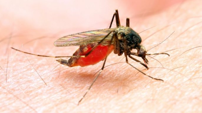 Após sete anos, Foz do Iguaçu confirma primeiro caso de malária contraído na cidade