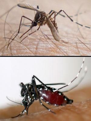 Brasil tem 828 casos de chikungunya, segundo Ministério da Saúde