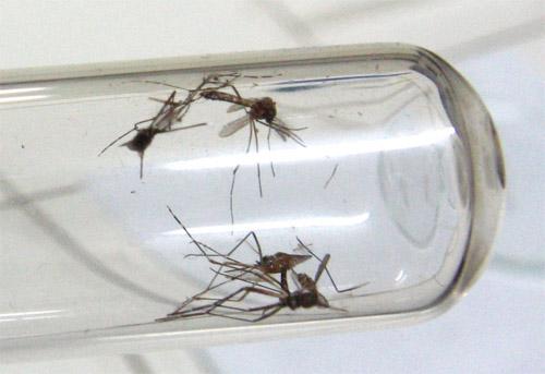 Infestação de Aedes é de 7,3% em Apucarana
