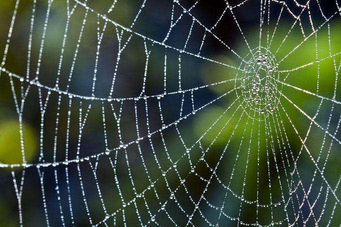 Nanofios são responsáveis pela força das teias de aranha